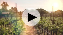 Using Self-Generation Fuel Cells in Vineyards & Wineries